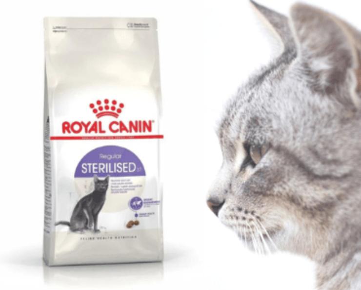 Nejlepší granule pro kočky