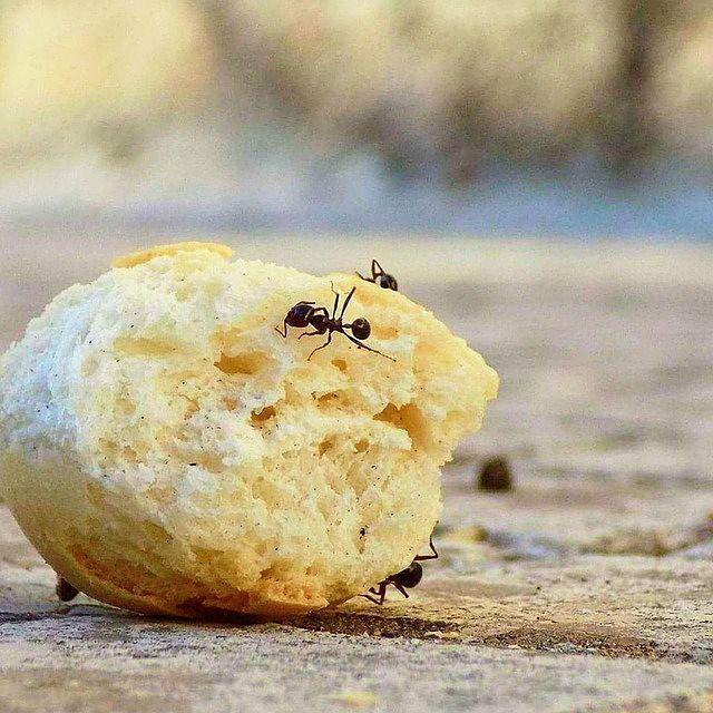 Prevence před mravenci