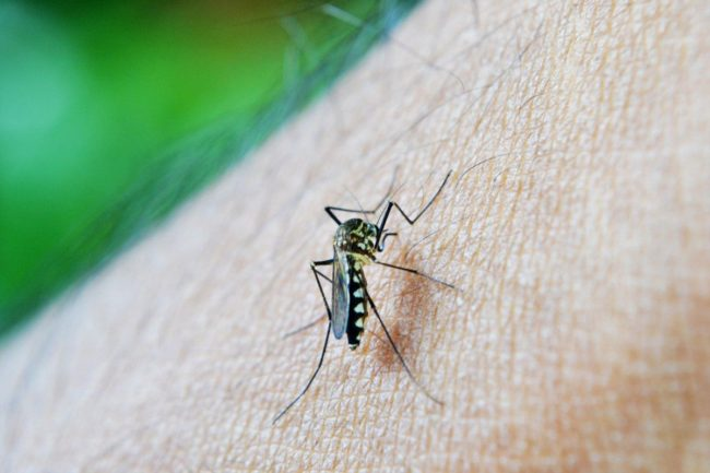 Jak vybrat lapač hmyzu