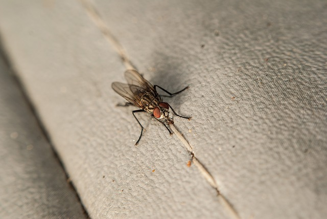 jak vybrat odpuzovač hmyzu