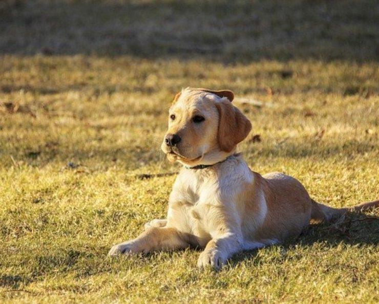 Nejlepší eshopy pro psy