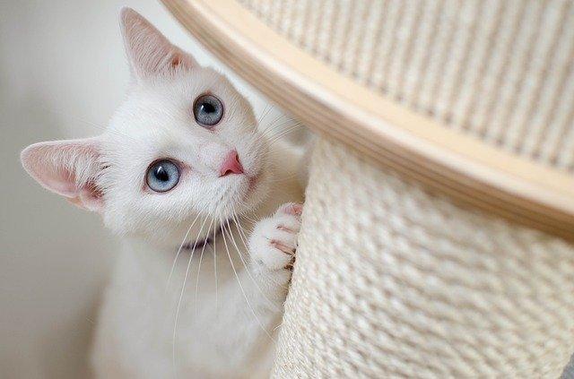 jak vybrat škrabkadlo pro kočku