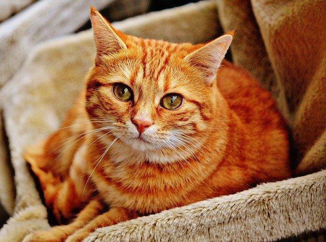 výbava pro kočky