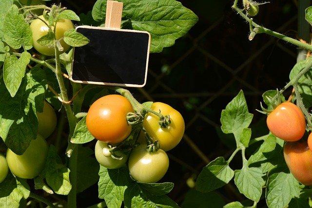 Ve vyvýšeném záhonu můžeet pěstovat třeba oblíbená rajčata