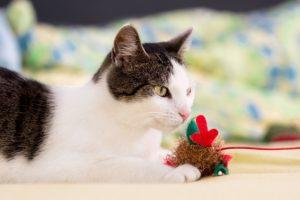 Nejlepší hračky pro kočky